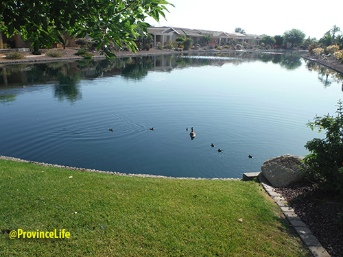 Province Ducks